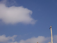 pajaro en nubes