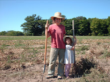 Dry bean harvesters