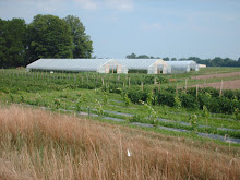 passive solar tunnels  and new vineyard seen from the pond