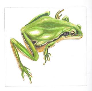 Le blog de by pimprenelle grenouille verte - Dessin de grenouille verte ...