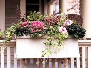 Classically Eclectic: Dreaming of Window Boxes....