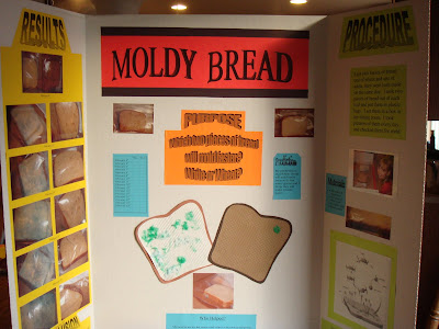bread mold science fair project View test prep - science fair from gov 101 at pike high school moldy bread abstract many food lovers are getting worried about the amount of preservatives and chemicals found in their everyday.