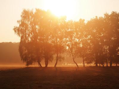 Baumgruppe - in rötlich schimmerdes sonnenlicht getaucht