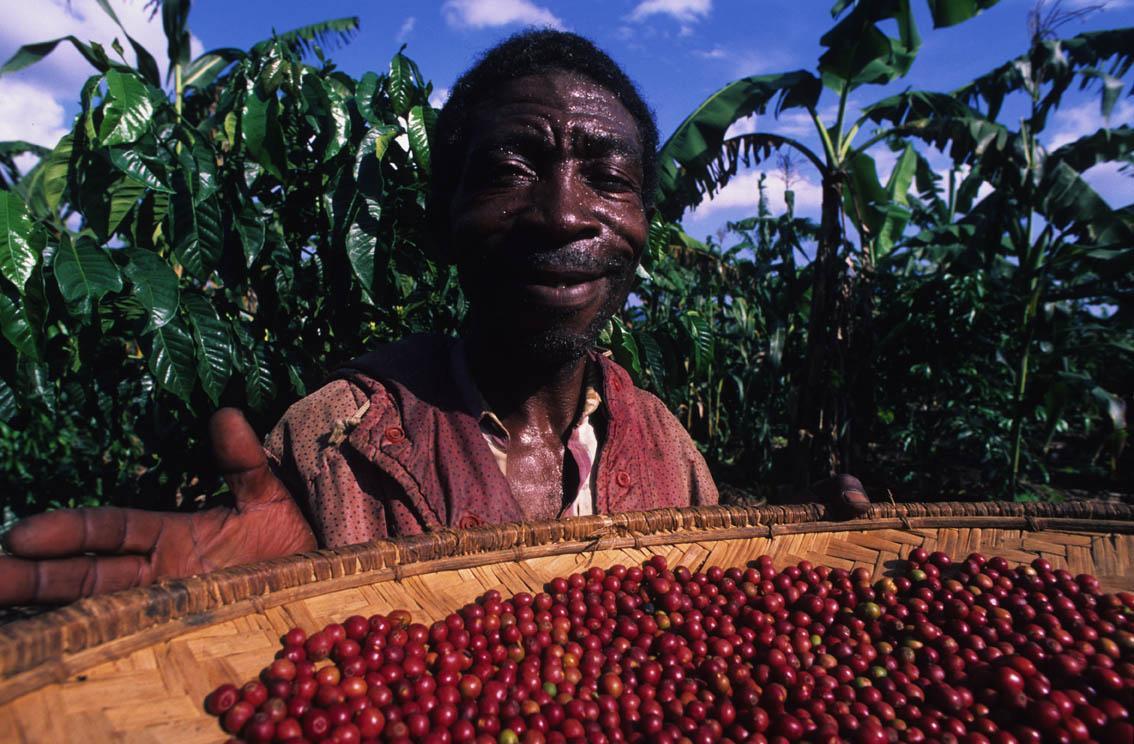 Assignment Fair Trade