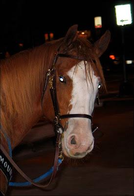 Traffic horse