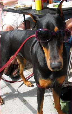 Cash the Dobie
