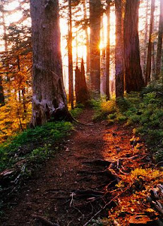 Pretty Trail Pic from OKTrailRunning.com