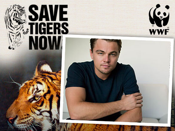 https://i1.wp.com/1.bp.blogspot.com/_yqh_sEuT6_k/TAYY7BugvzI/AAAAAAAAM0s/8M3QTrqQhYw/s1600/save-tigers-wwf-dicaprio-1.jpg