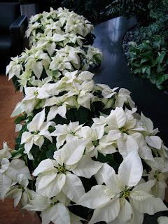 interior flower rotation pricing discount design care;