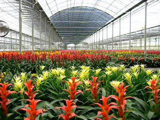 interior plant care discounts; flowering plant rotation;office plant installation;