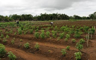An African Vegetable Garden