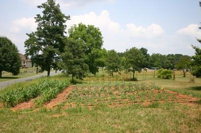 Jonathan's vegetable garden