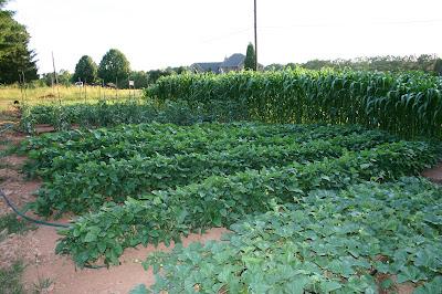 Jonathan Eller's garden 7_1_08