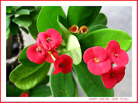 Easter Greeting card with the Dwarf Crown of Thorns (Euphorbia milii), growing in our garden