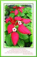 Christmas greeting card 2007