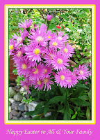 Happy Easter! Happy Asters in our garden