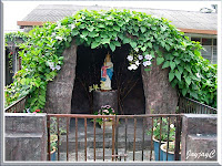 Grotto of Blessed Virgin Mary adorned by the lovely vine, Thunbergia laurifolia