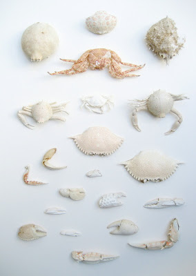 Erin Curry-collection of crabs