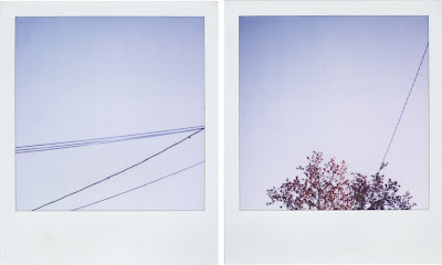 Erin Curry- Polaroid diptych, redmaple 2/2