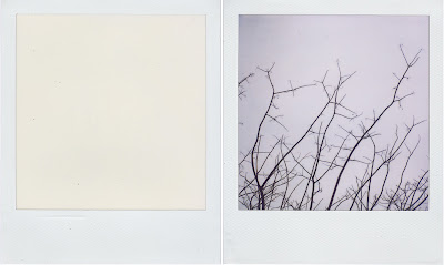 Erin Curry- Polaroid diptych blank and mimosa