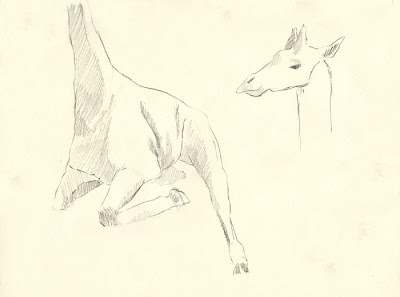 Erin Curry sketch of giraffe