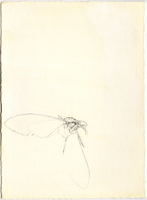 Erin Curry art- drawing of moth