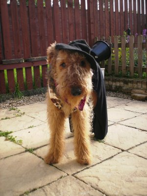 In Memory of Oscar Airedale