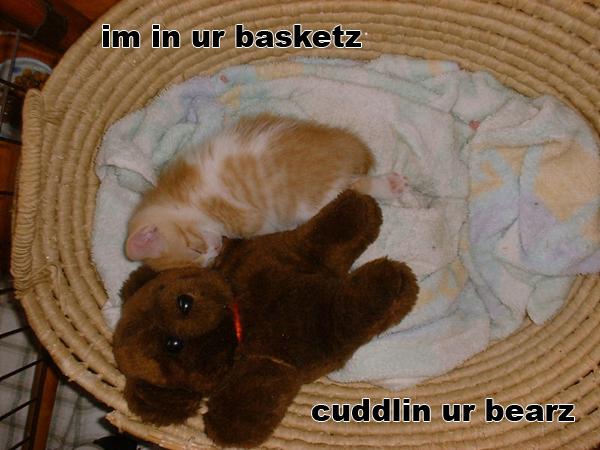 basketbear.jpg