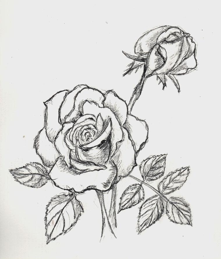 Dibujos Flores Sencillas Flores De Distintos Colores Conjunto De