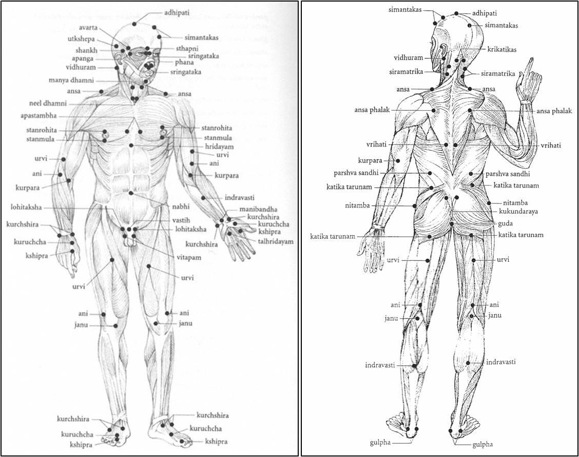 martial arts diagram ecu wiring mitsubishi plain truth no cosmetics who am i part 20 marma