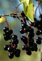 Not Forbidden Fruit