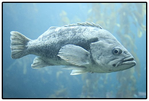 [blue.fish.jpg]