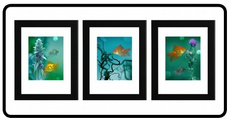 [fish.series.jpg]