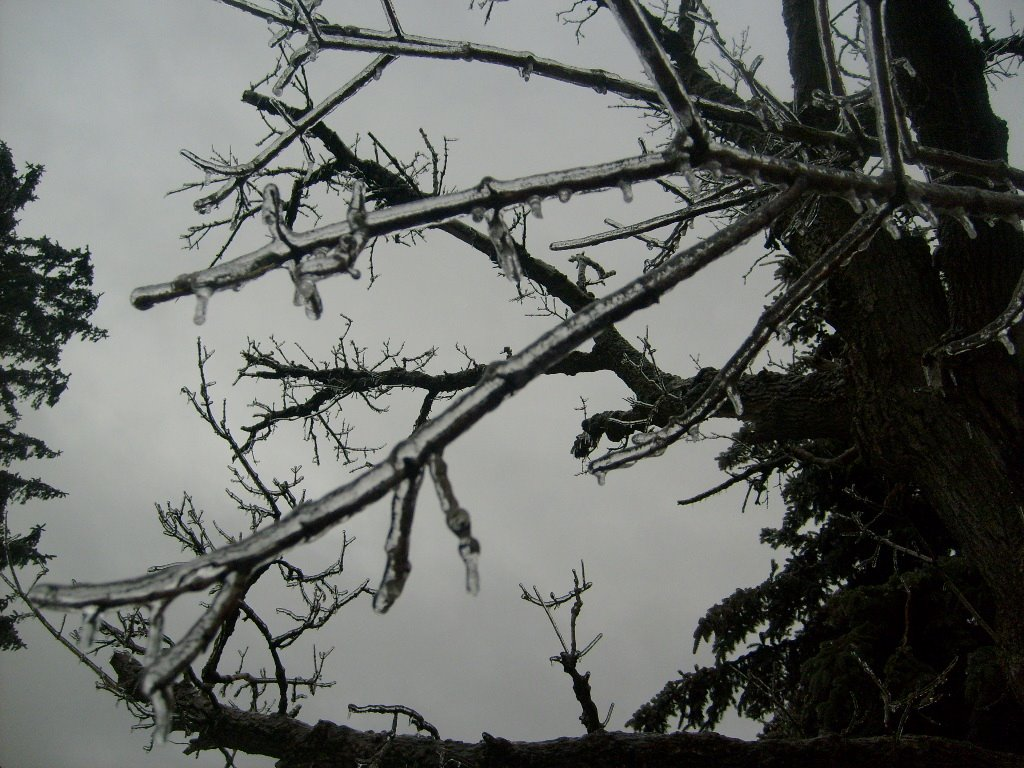 [Ice+Storm+March5+08+004.jpg]