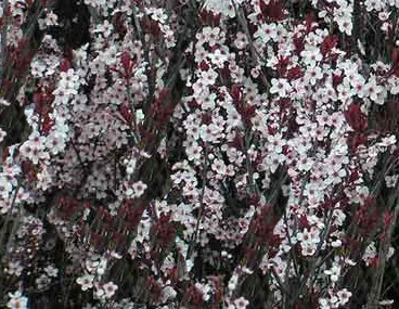 A Guide To Northeastern Gardening Deciduous Trees Shrubs
