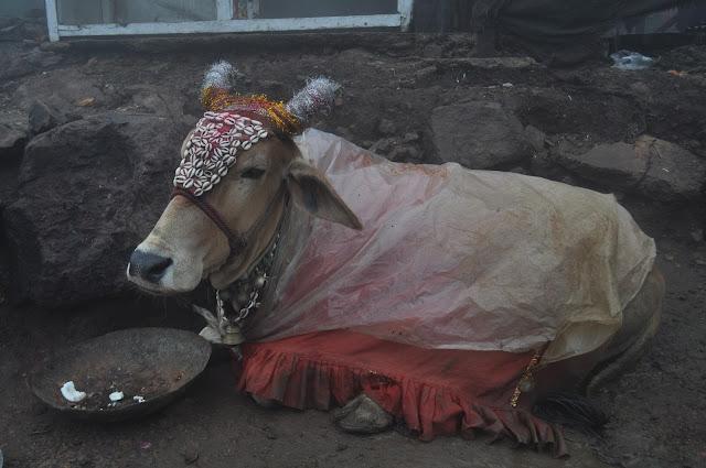 pavagarh travel travelogue trip friends monsoon gujarat cow