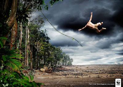efeitos do desmatamento