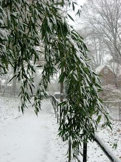 snow bamboo