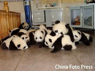 piles of pandas!