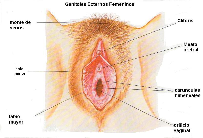 La grasa vino de la vagina