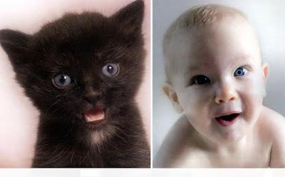 5copy - Copy Cats (cute)