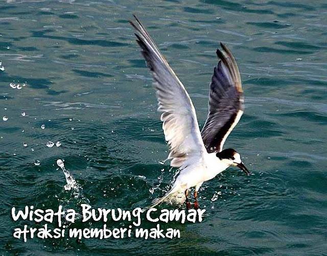 BERKEBUN DI LAUT | Ekowisata di Tanjung Lesung