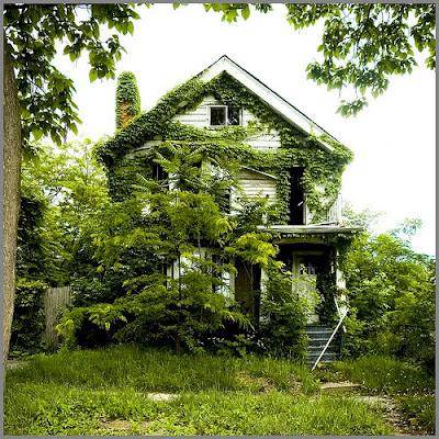 James D. Griffioen feral houses