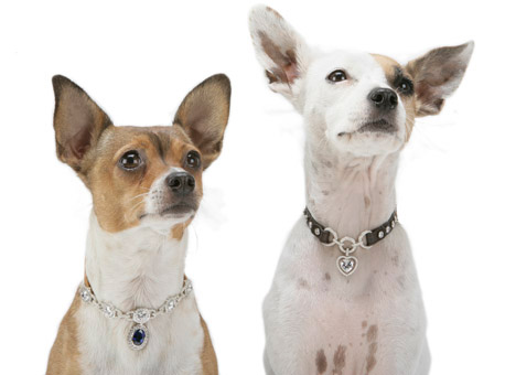 dimaond collars for dogs