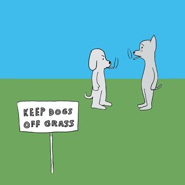 keep dogs off grass