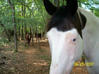 East Texas Horse Rescue and Sanctuary Alto Texas