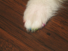 Koda's Toe Nails