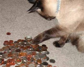 Http Www Catster Com Lifestyle Cat Behavior Litter Box Type