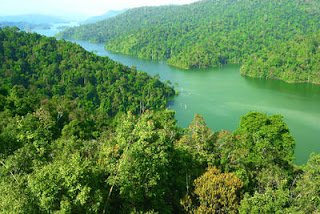 Malaysia's tropical forests