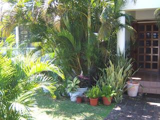 Garden Shots Of My West Indian